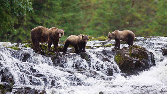 Tour maxseigal southeast alaska board national geographic expeditions